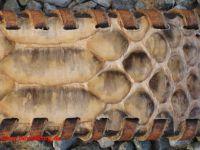 Sendra Gürtel aus Python Leder